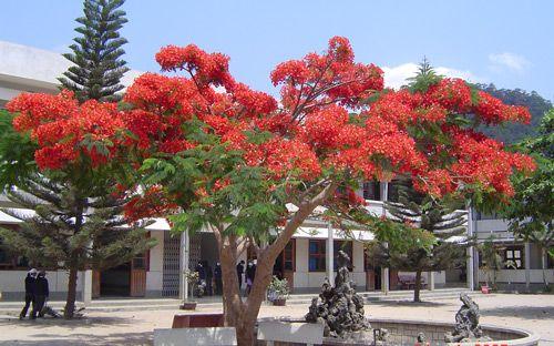 Image result for san truong  thoi ao trang  photos