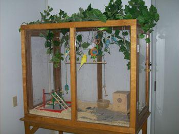 Bird Aviary | diy parakeet cage | Pinterest | Bird aviary ...