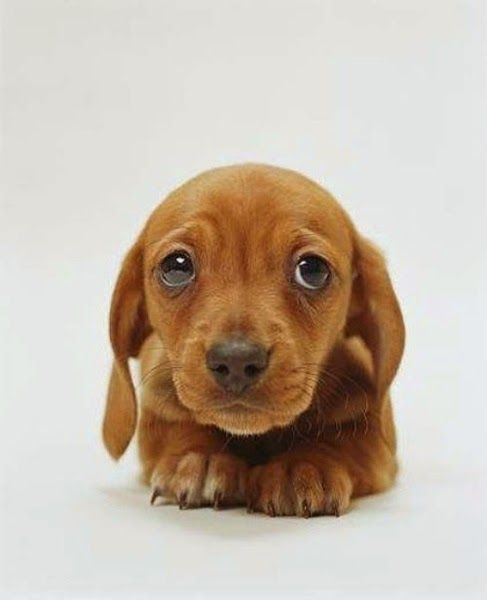 This New Study Proves The Science Behind Puppy Dog Eyes Cute