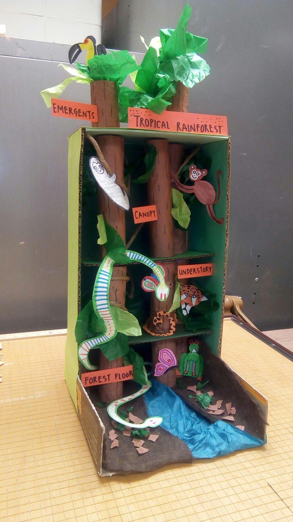 Tropical Rainforest Diorama | t e a c h | Rainforest ...