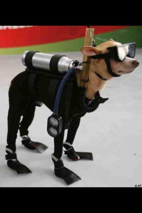 Doggy snorkler