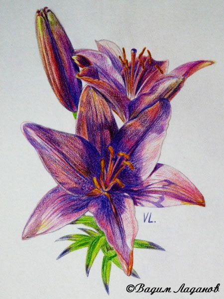 Цветы цветными карандашами рисунки
