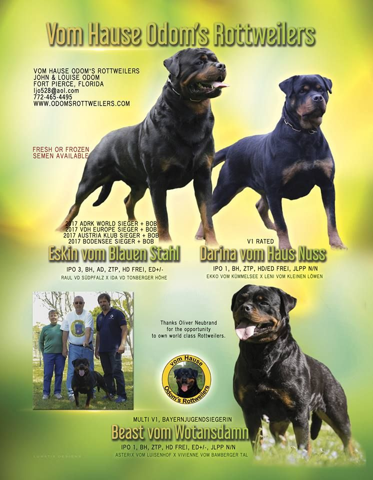 Vom Hause Odom S Rottweilers Louise John Odom Fort Pierce