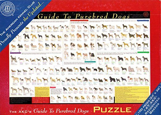 Purebred Dogs Jigsaw Puzzle