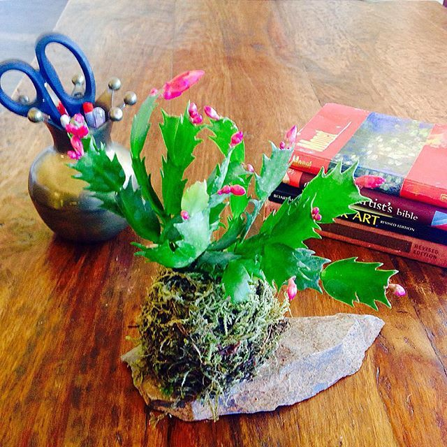 KOKEDAMA PHOENIX Perfect Holiday Gift For The Office. Plants Are Grounding  When The Stress Level