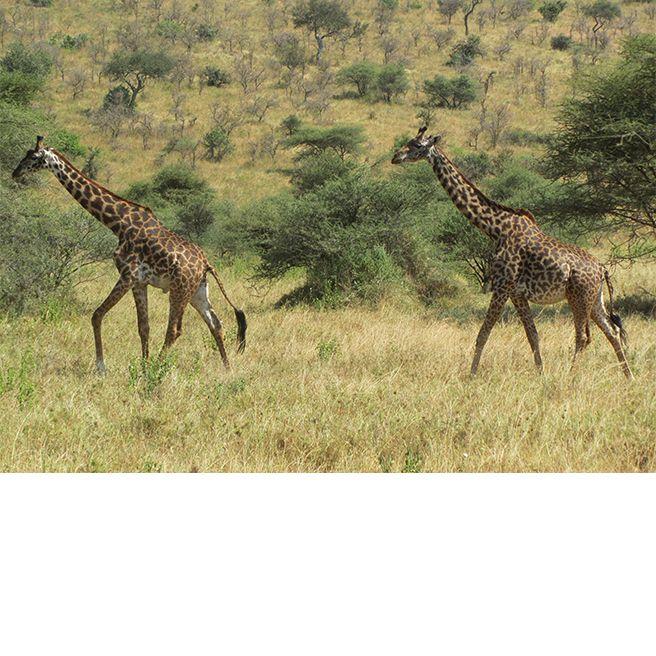 A Photo Diary of Designer Anna Sui's Safari in Tanzania