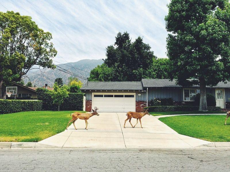 #deer #muledeer #southerncalifornia #surreal