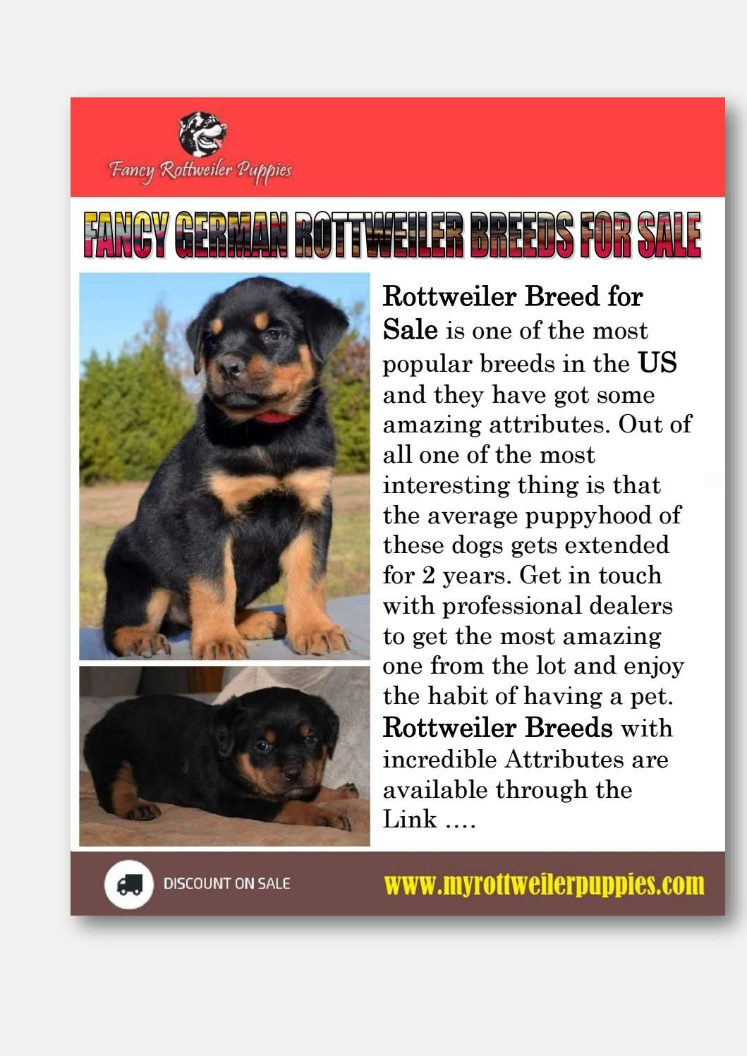 Fancy German Rottweiler Breeds For Sale Rottweiler Breed German
