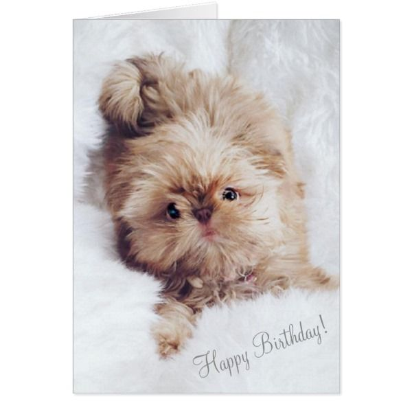 Penny Orange Liver Shih Tzu Greeting Birthday Card Cards Birthday