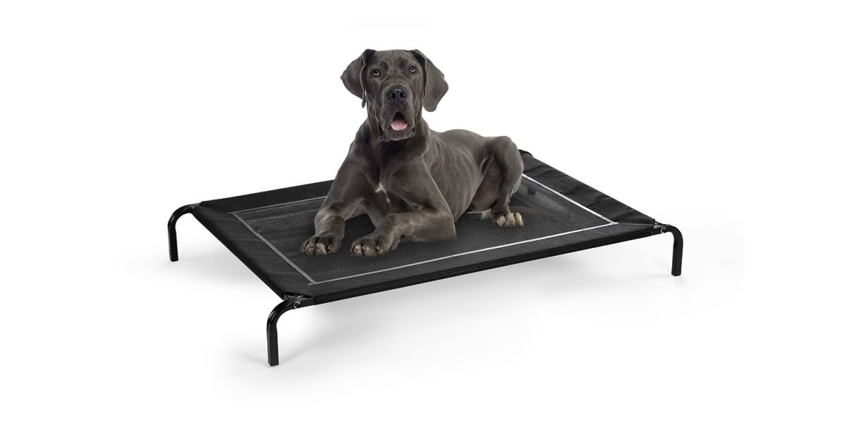Image result for Dog Beds for Your Beloved Pet