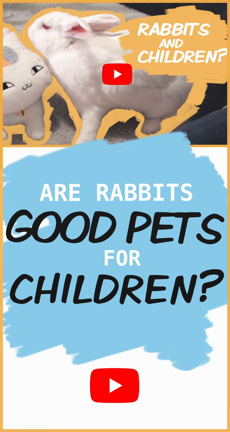 Rabbits Are Often Described As Simple Beginner Pets To Give To A Child But Is That Actually True Are Rabbits Good Pets For Children Or Should They Kept Away In 2020