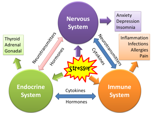 Psychoneuroimmunology Or Pni How Stress Affects Your