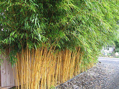 Iinstant bamboo screening Outdoor privacy screen using