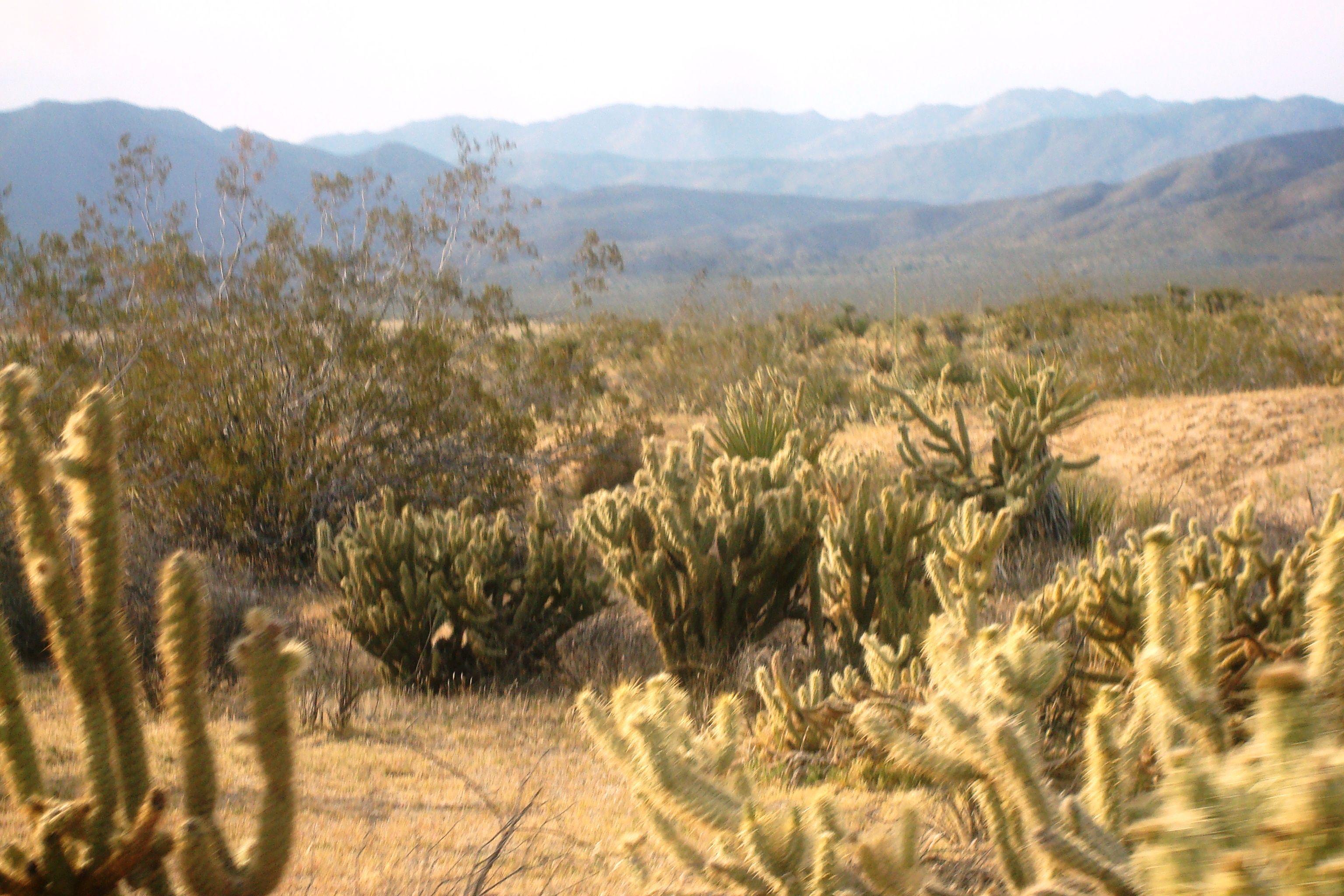 Setting sun over the desert!