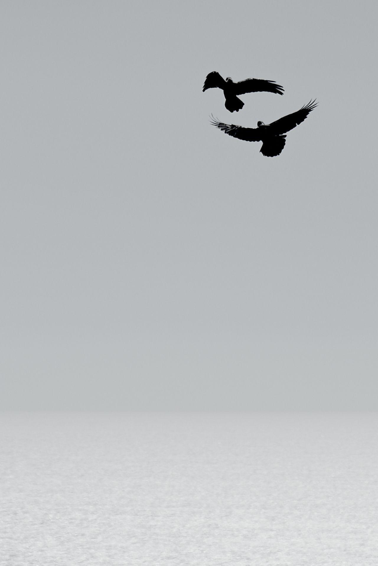 возбуждение в свободном полете   Minimal photography ...