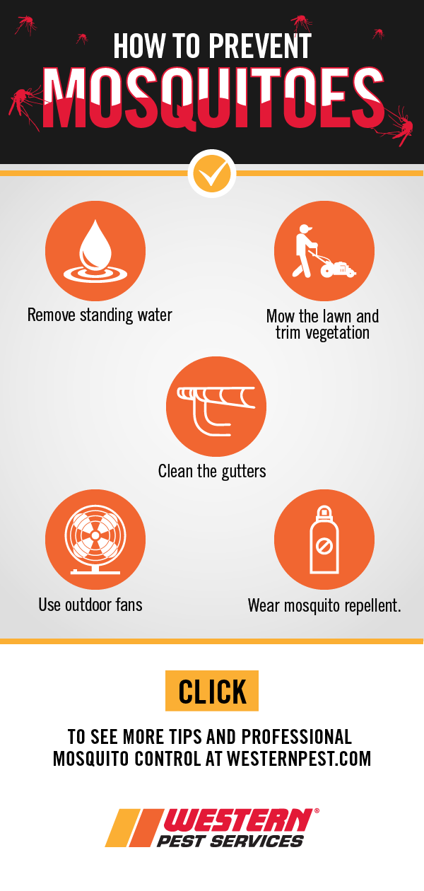 5 Tips for Preventing Mosquitoes | Western Pest Services