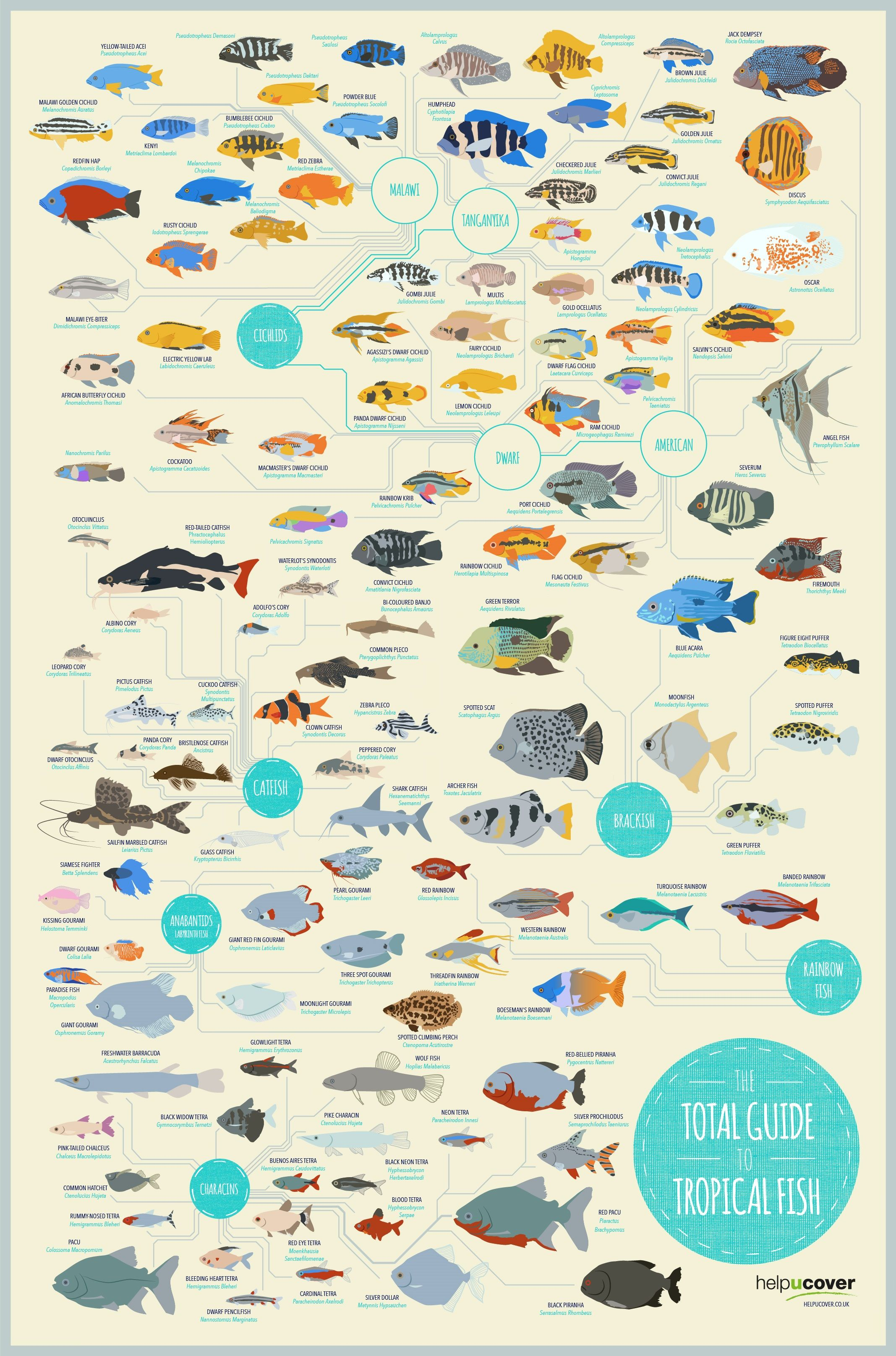 Freshwater aquarium fish guide - The Total Guide To Tropical Fish Infographic