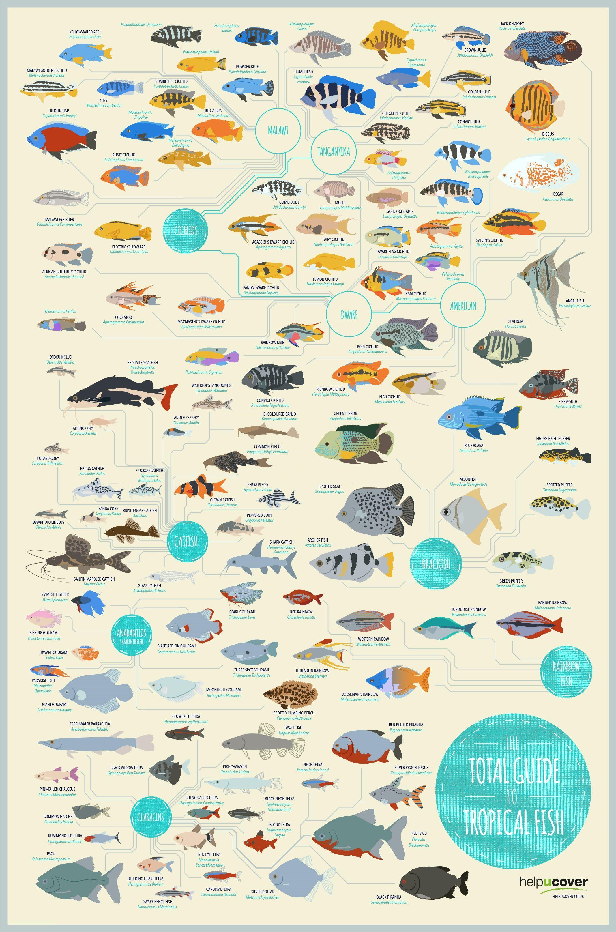 The total guide to tropical fish infographic acuarios - Acuario en casa ...