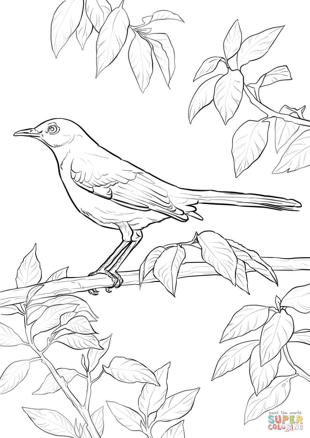 Northern Mockingbird coloring page from Mockingbird