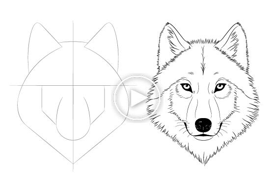 Facile Dessin Tutoriels Pour Les Artistes Debutants Et Intermediaires Como Dibujar Un Lobo Lobos Para Dibujar Bocetos De Animales