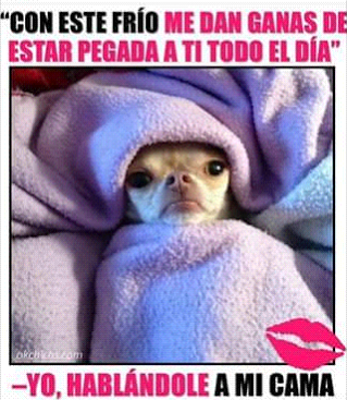 Screenshot 2016 03 07 00 55 10 Png 319 367 Funny Animal Pictures Funny Animal Memes Chihuahua