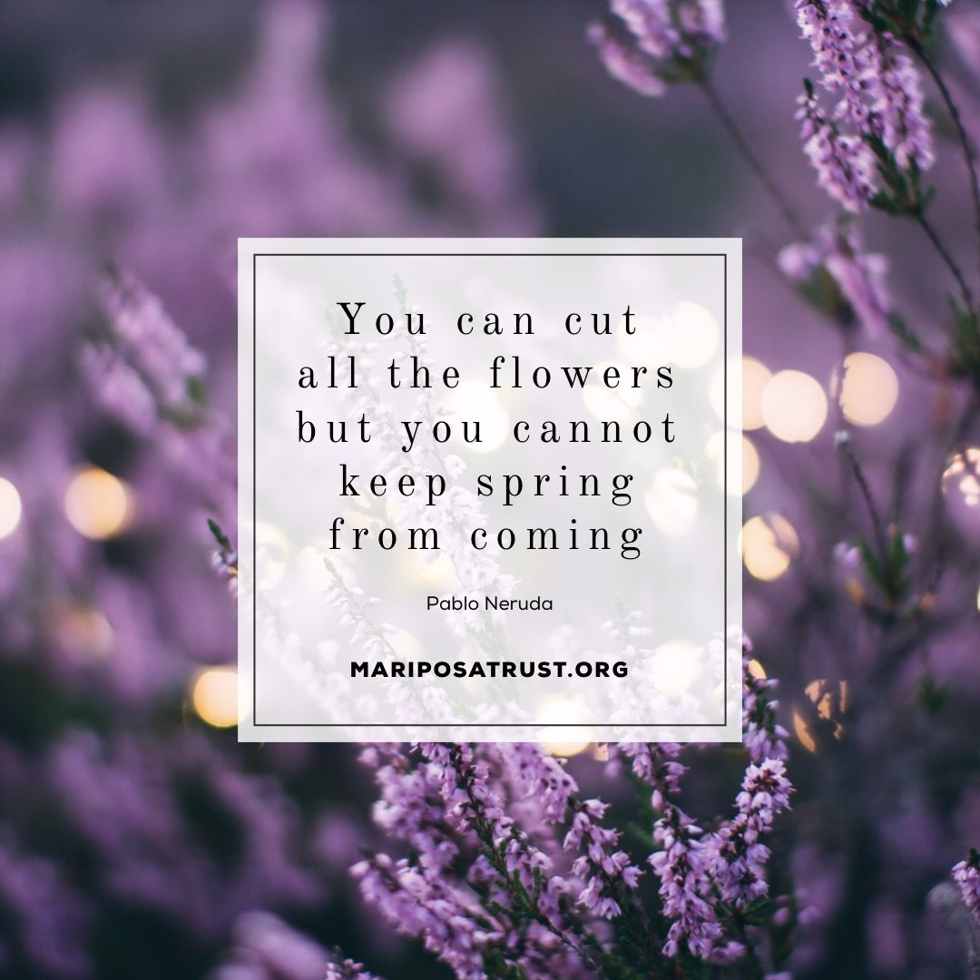 Spring Flowers Quote March Mariposatrust March Pinterest