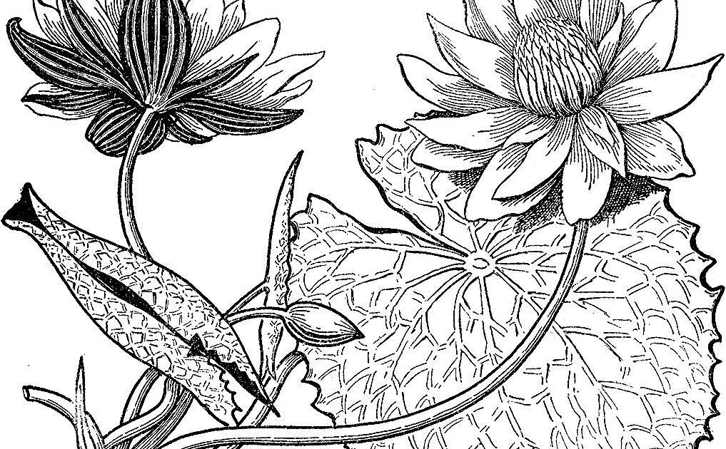 Teratai In 2020 Lotus Flower Tattoo Flower Tattoo Flowers