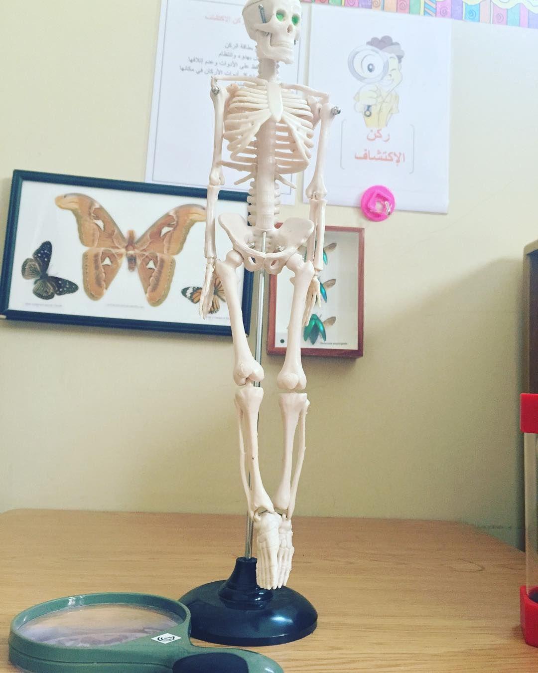 غ راس م عل مة On Instagram ركن الإكتشاف وضعت لهم هيكل عظمي لأني مالقيت مجسم لعظام كف اليد لوحدها وطلبت منهم يتفحصون اليد واجزا Novelty Lamp Lamp Table Lamp