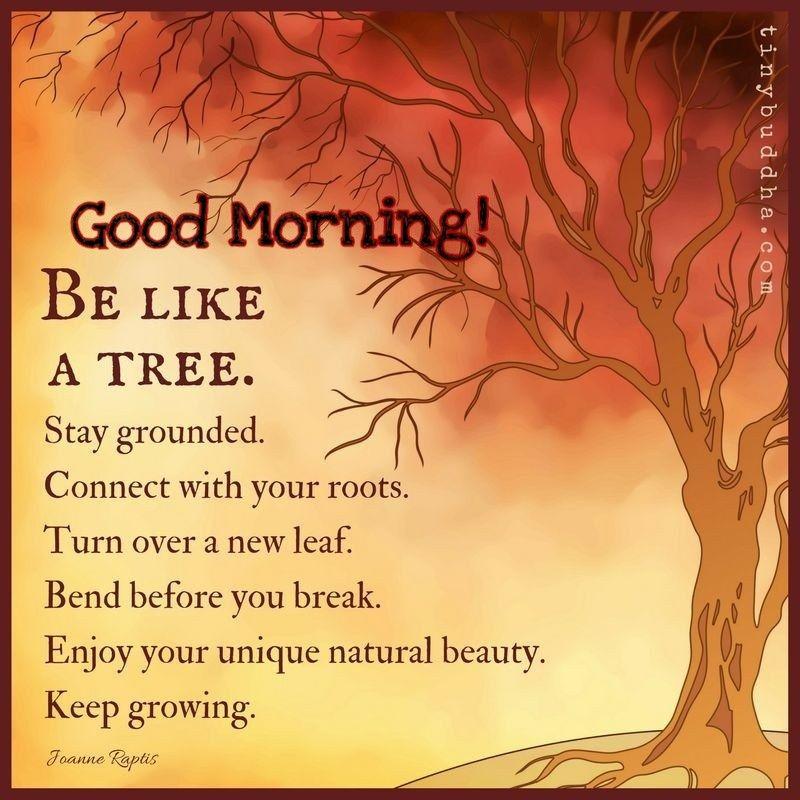 Good Morning quote. (mit Bildern) Zitate über natur