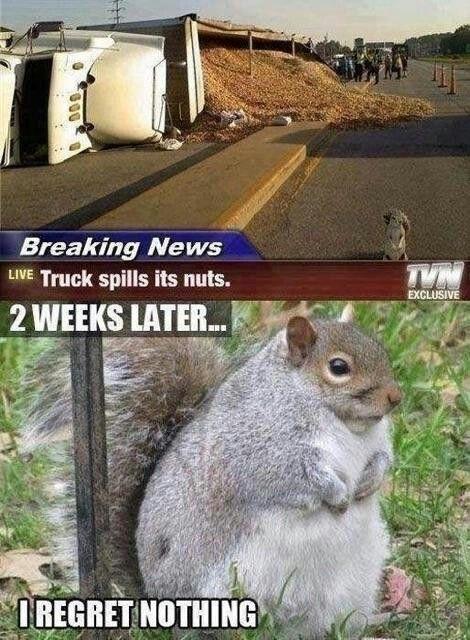 Squirrel Gets Fat