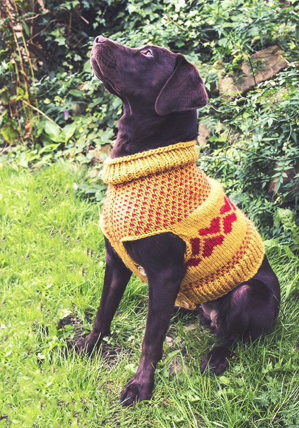 Following the success of the little jumper I designed for Juno ...