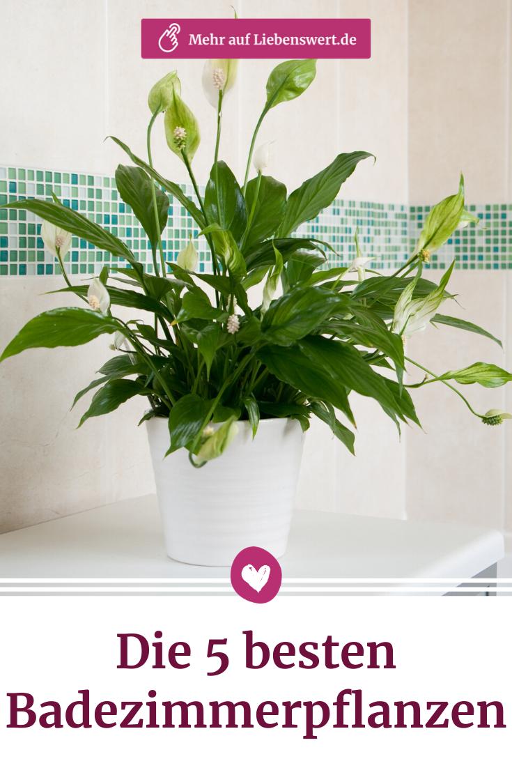 Badezimmerpflanzen Die 5 Pflanzen Sind Perfekt Geeignet In 2020 Badezimmerpflanzen Pflanzen Blumenkubel Fur Den Herbst