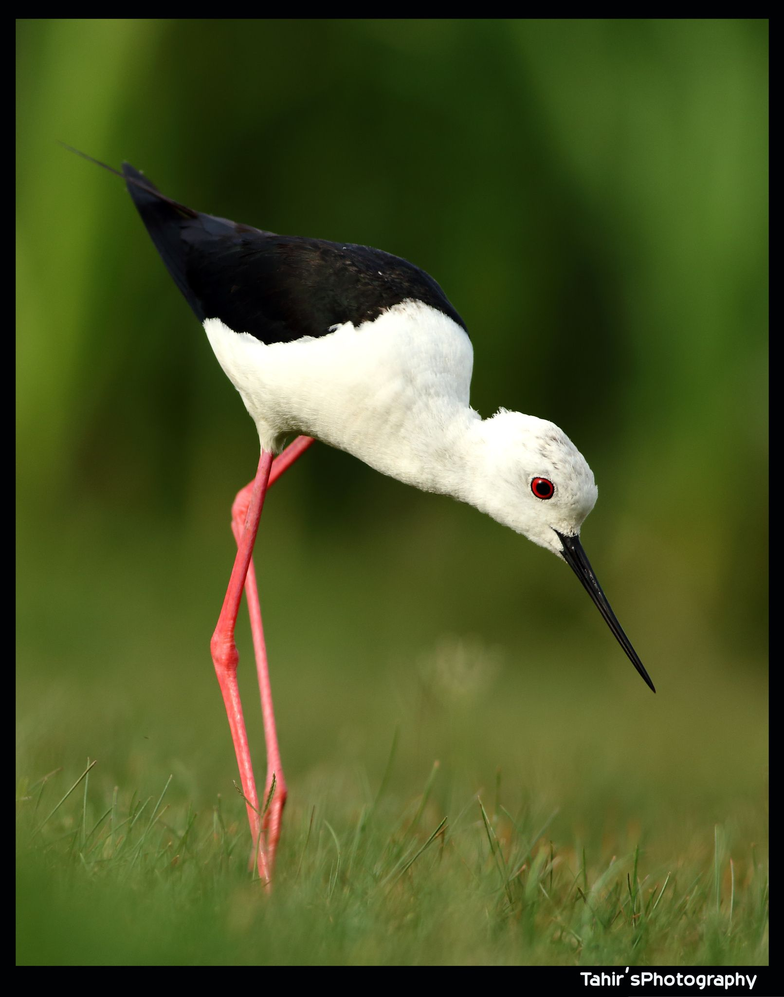 Stilt by Nature images on 500px
