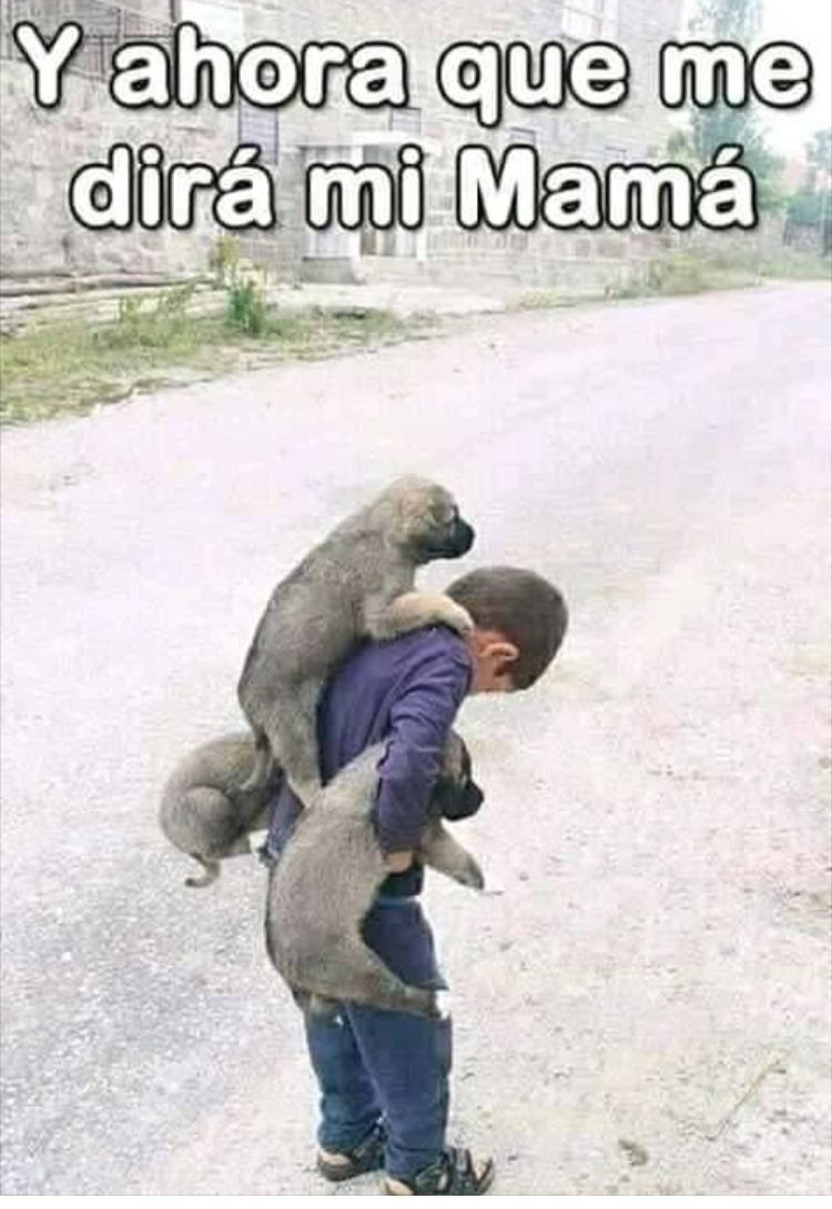 Pin By Nidia On Mascostitas Y Mucho Mas Funny Spanish Memes Memes Funny