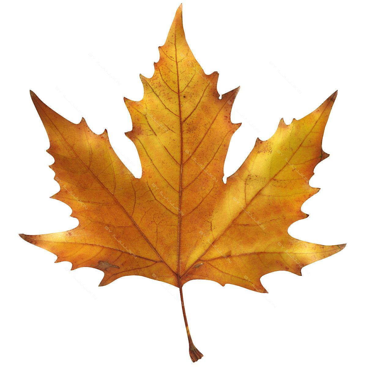 Botanical Home Decor Maple Leaf Поиск в Google Green Kiev Pinterest