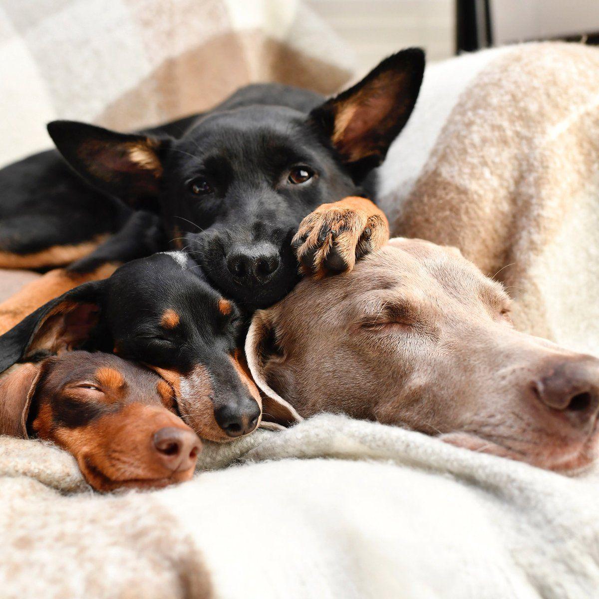 Harlow And Sage Harlowandsage Twitter Cute Dogs