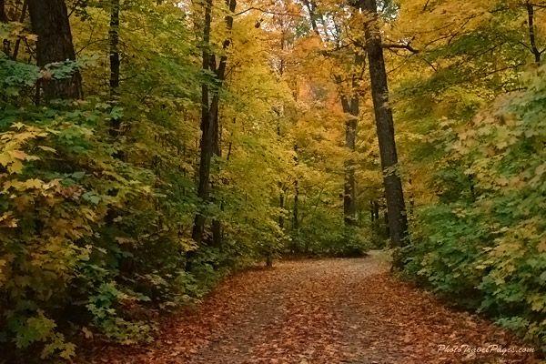 algonquin_trails.jpg 600×400 pixels
