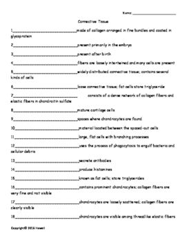 Connective Tissue Vocabulary Quiz or Worksheet for Anatomy