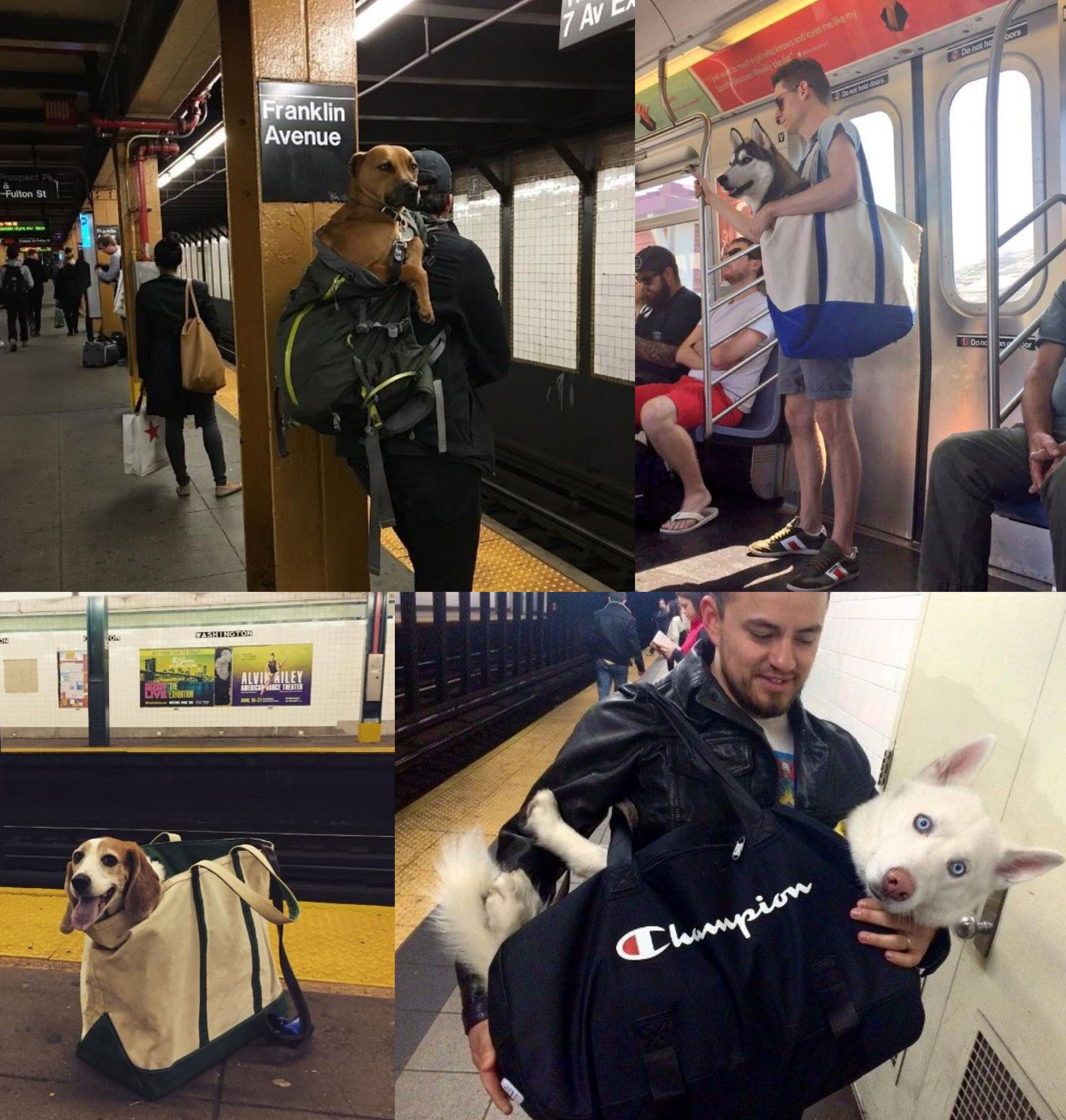 The New York City Subway banned dogs unless they fit in a