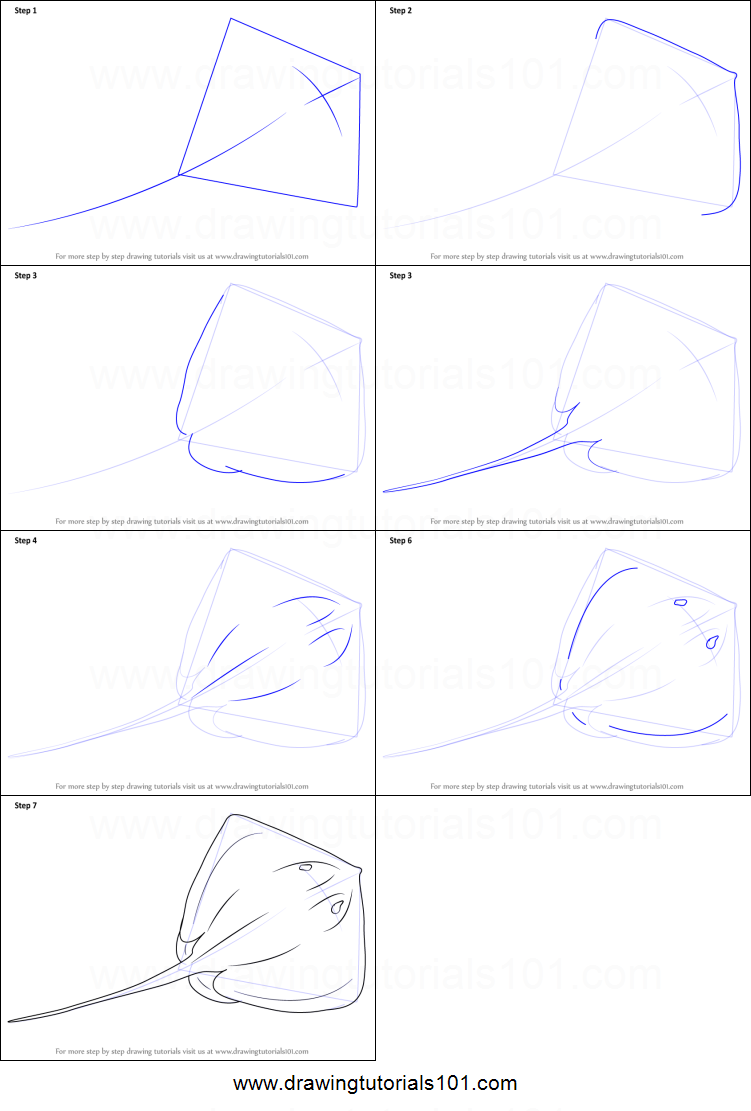 How to Draw a stingray step by step for seaglass