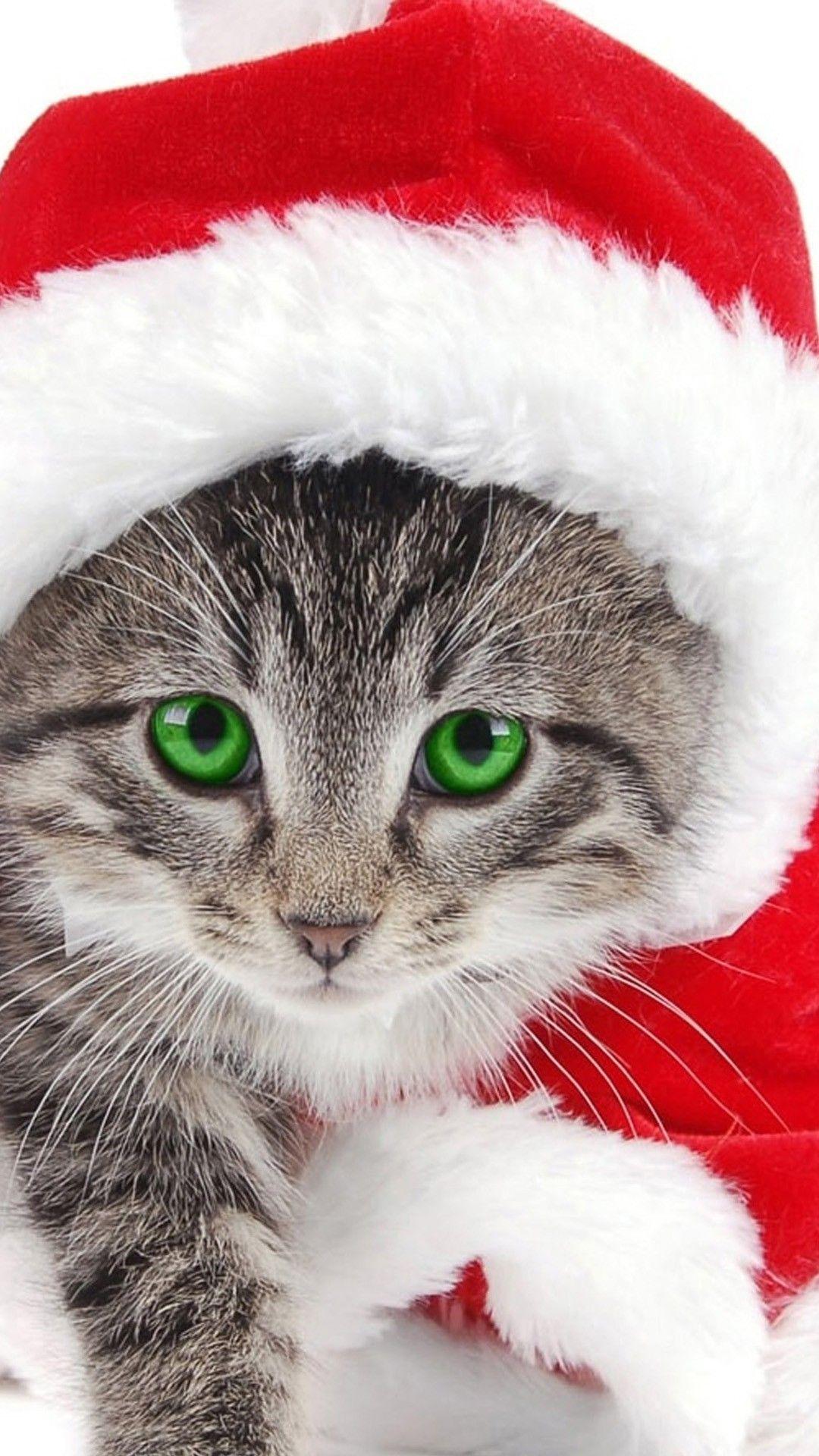 200+ Free Christmas Cat & Cat Images - Pixabay