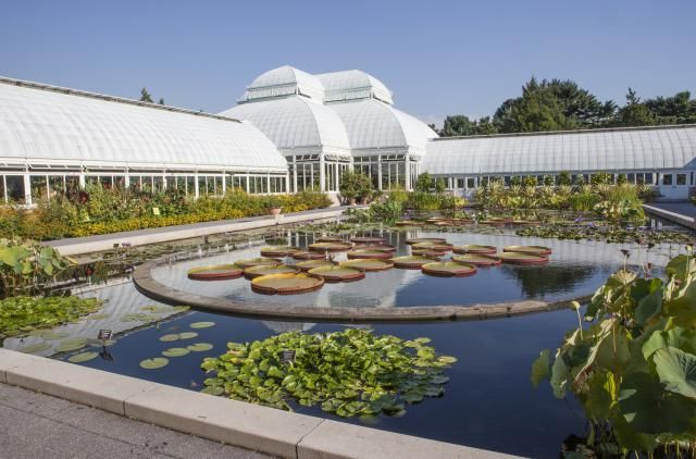 e9cdae3284e97458aca6d0fd711493ae - Restaurants Near The Botanical Gardens Bronx Ny
