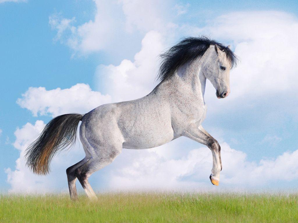 Must see Wallpaper Horse Pinterest - e9cdc914c75f787f9a4d9411c3ac36fe  2018_883946.jpg
