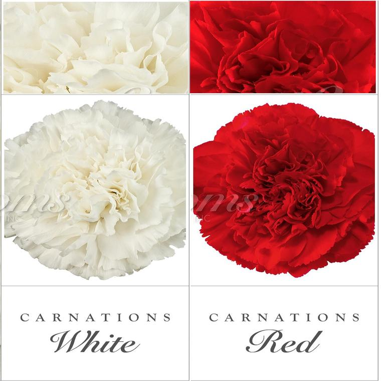 Carnation Duo White And Red Ebloomsdirect Flower Arrangements Diy Mini Carnations Carnation Flower