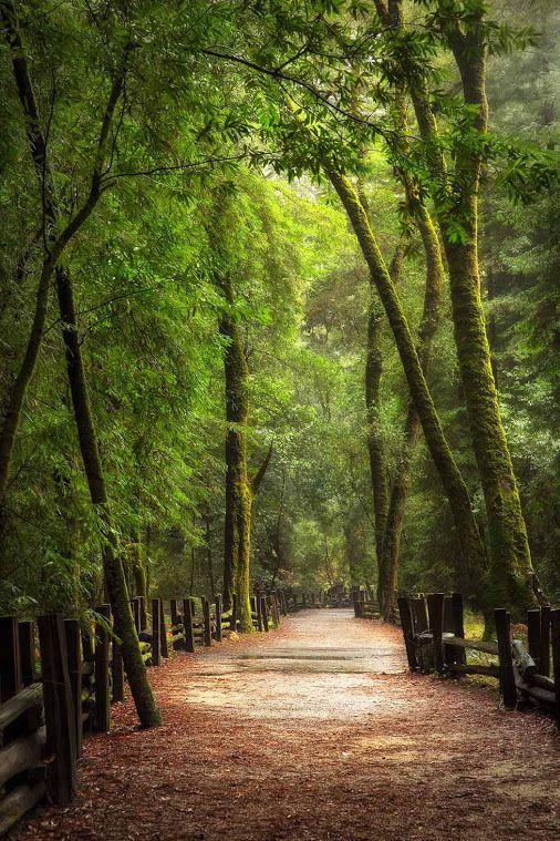 92f594a4a belo corredor de árvores | Lindas Imagens, Belas paisagens en 2019 ...