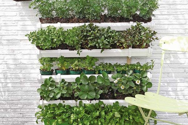 17 best 1000 images about Herb Wall on Pinterest Gardens Grow your