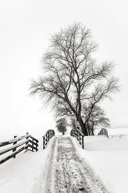 Photographie En Noir Et Blanc Inspiration Photographie