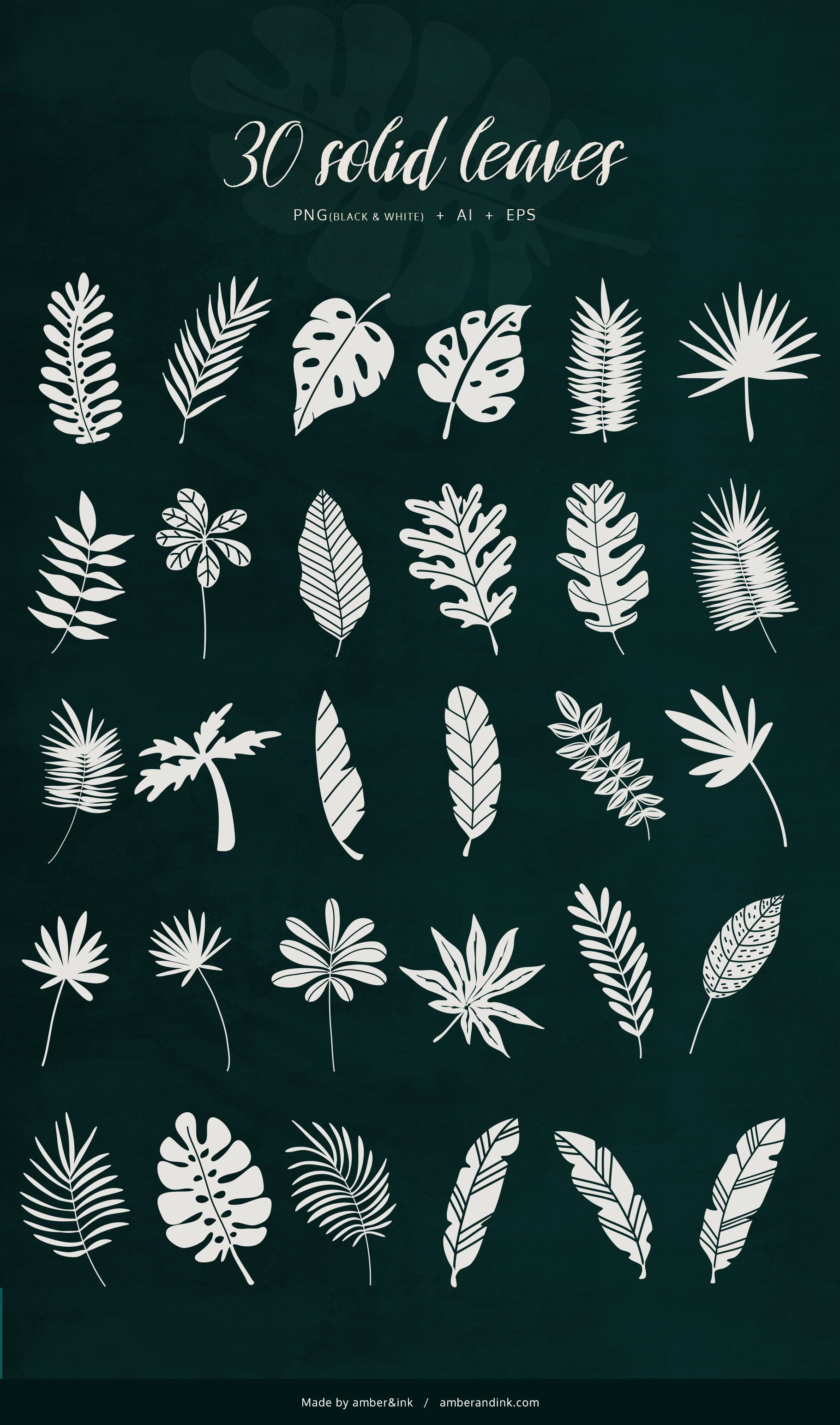 Tropical Leaves & Patterns