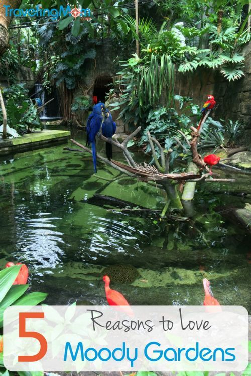 e9d0c3a0a5d22d32a499ef62175d9c19 - Moody Gardens Spring Break In Texas