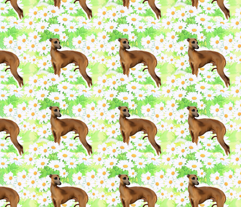 Italian greyhound and daisies fabric fabric by dogdaze_ on Spoonflower - custom fabric